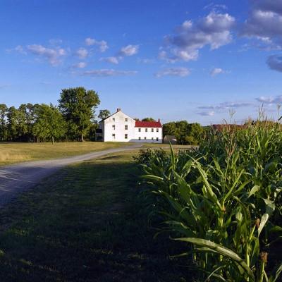 best-farm-corn