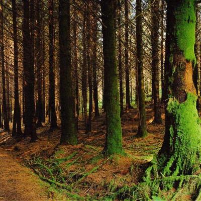 Derv-trees