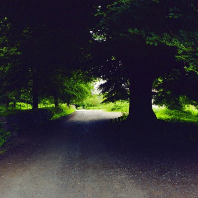 Exmoor-oak