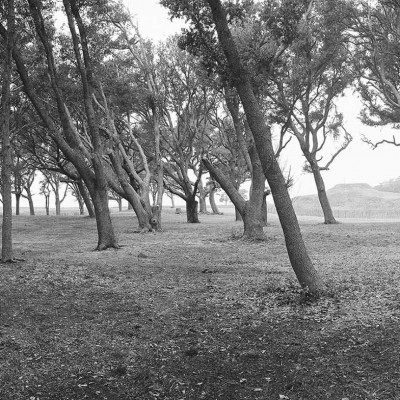 Fort-Fisher-trees