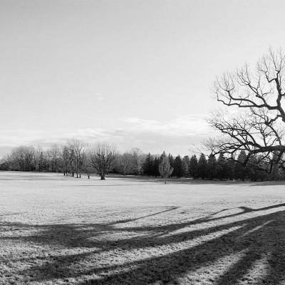 Mercer-Oak