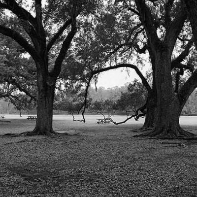 MP-trees