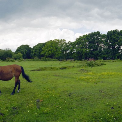 New-Forest-ponies