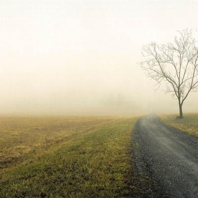 Rose-Farm-fog