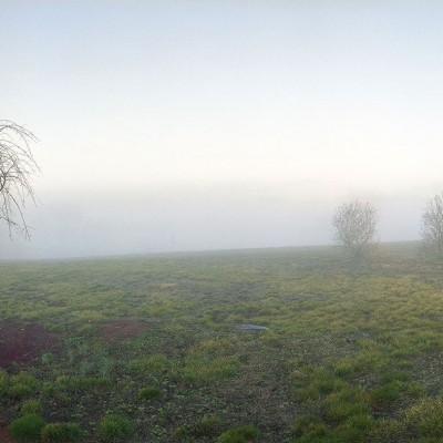 fog-6441-trees